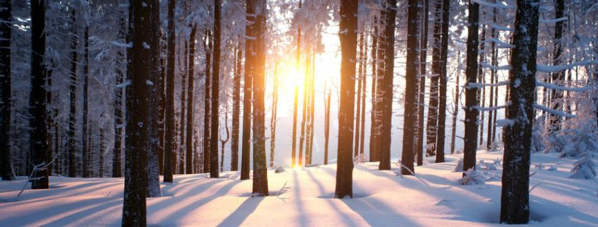 Truii data visualization, analysis and management light through forest in snow